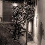 DJNSHOTS-WEB-20151111-013